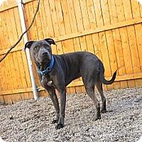 Adopt A Pet :: Skye - Providence, RI