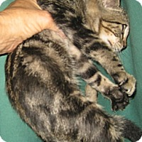 Adopt A Pet :: Meg - Dallas, TX
