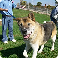 Adopt A Pet :: Ryder - Lancaster, OH