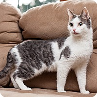 Adopt A Pet :: Faeryn - Addison, IL