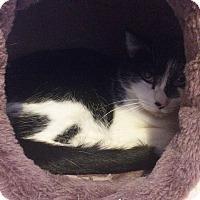 Adopt A Pet :: Cori - Ogallala, NE
