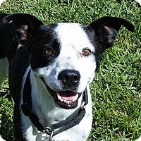 Adopt A Pet :: Margarita - Miami, FL