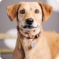 Adopt A Pet :: Peanut Butter - Portland, OR