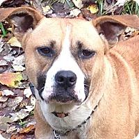 Adopt A Pet :: Bianca - Hagerstown, MD