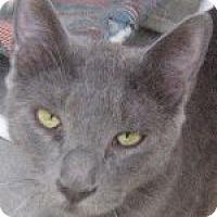 Adopt A Pet :: Edgar - Odessa, TX