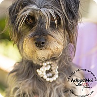 Adopt A Pet :: STELLA - Inland Empire, CA