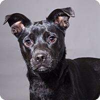 Adopt A Pet :: Wonton - Sudbury, MA