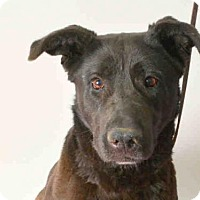 Adopt A Pet :: BAILEY - Ukiah, CA