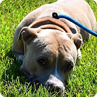 Adopt A Pet :: Buster D-70139 - Westampton, NJ