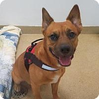 Adopt A Pet :: Ghost - Miami, FL