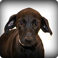 Adopt A Pet :: Brody Langford - Glastonbury, CT