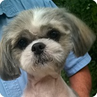 Adopt A Pet :: Connie - Orlando, FL