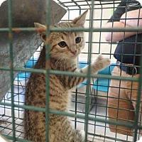 Adopt A Pet :: GENERAL - Louisville, KY
