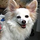 Adopt A Pet :: Beau  9 yrs (In GA)