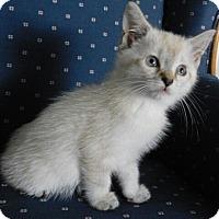 Adopt A Pet :: Lacey - Davis, CA