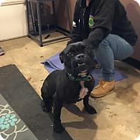 Adopt A Pet :: Ebony - Freehold, NJ