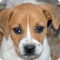 Adopt A Pet :: Kite - Glastonbury, CT