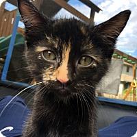 Adopt A Pet :: Cookie Dough - Bonner Springs, KS