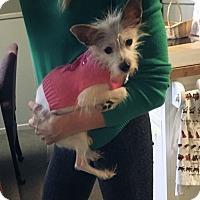 Adopt A Pet :: Cessna - Hartford, CT