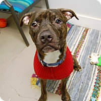 Adopt A Pet :: Burt - Wilmington, DE