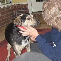 Adopt A Pet :: Charlie - Nesbit, MS