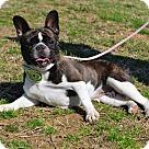 Adopt A Pet :: Eva the Diva