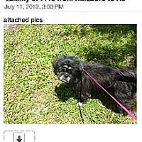 Adopt A Pet :: Sammie - Ft. Lauderdale, FL