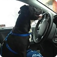 Adopt A Pet :: CHICO - Brooklyn, NY