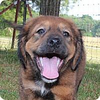 Adopt A Pet :: Olexa - Hagerstown, MD