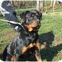 Adopt A Pet :: Lilith - Douglasville, GA