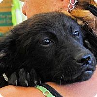 Adopt A Pet :: Miami - Shelter Island, NY
