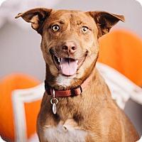 Adopt A Pet :: Ruby Tuesday - Portland, OR