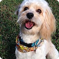 Adopt A Pet :: PACO - Melbourne, FL