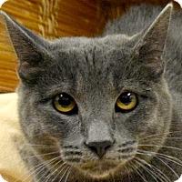 Adopt A Pet :: Silver Star - Huntley, IL