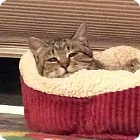 Adopt A Pet :: Buster - Ogallala, NE