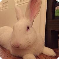 Adopt A Pet :: Vegas - Holbrook, NY
