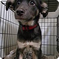 Adopt A Pet :: 16-02-0403 - Dallas, GA
