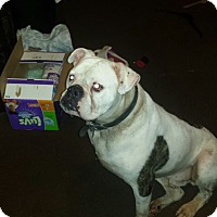 Adopt A Pet :: Macho - Elyria, OH