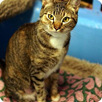 Adopt A Pet :: June Bug - Tucson, AZ