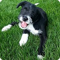 Adopt A Pet :: Rebel - Joliet, IL