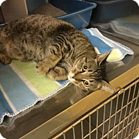 Adopt A Pet :: Blake Lively - Richboro, PA