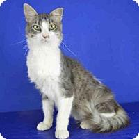 Adopt A Pet :: A024993 - Norman, OK