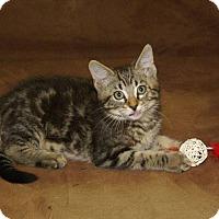 Adopt A Pet :: Sparkplug - Hawk Point, MO