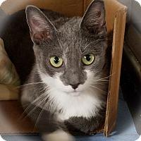 Adopt A Pet :: Priscilla - Trevose, PA