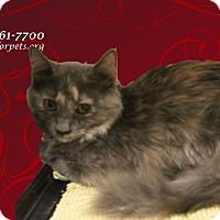 Adopt A Pet :: A Young Female: TARA - Monrovia, CA