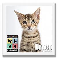 Adopt A Pet :: Draco - Palm Desert, CA