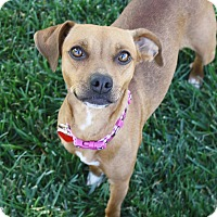 Adopt A Pet :: Phoebe - 15 lbs! - Los Angeles, CA