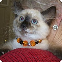 Adopt A Pet :: Stormy - Picayune, MS