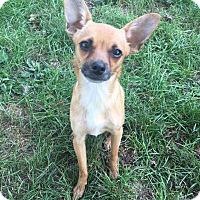Adopt A Pet :: Jane - Lima, PA