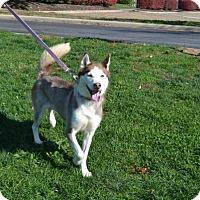 Adopt A Pet :: Skye - Akron, OH